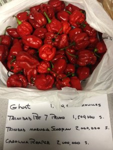 Several of the hottest peppers with capscacin scores.